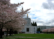 state capitol building / cherry blossoms