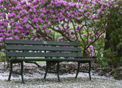 capitol mall bench / cherry blossoms
