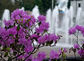 flowers / capitol fountain