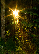 Starburst in forest