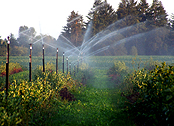 watering fields