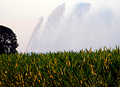 watering corn fields