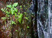 plants on waterfall