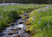 Camas and stream (provided by State Lands)