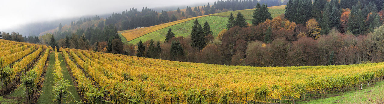 Landscape photo of a vineyard and trees changing color in the fall.