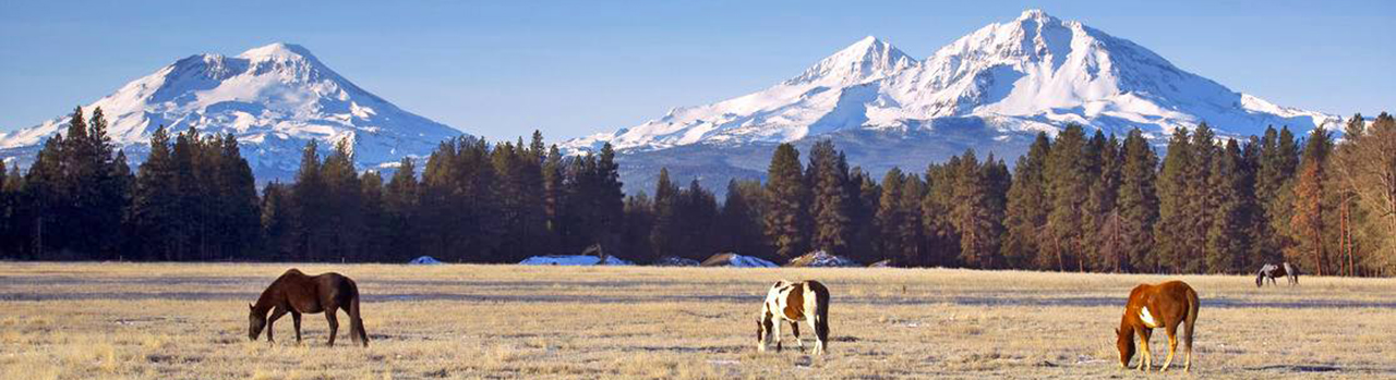 Horses grazing in Central Oregon with snowy mountains in the background.