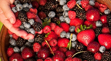 Hand in a bowl of fresh berries.