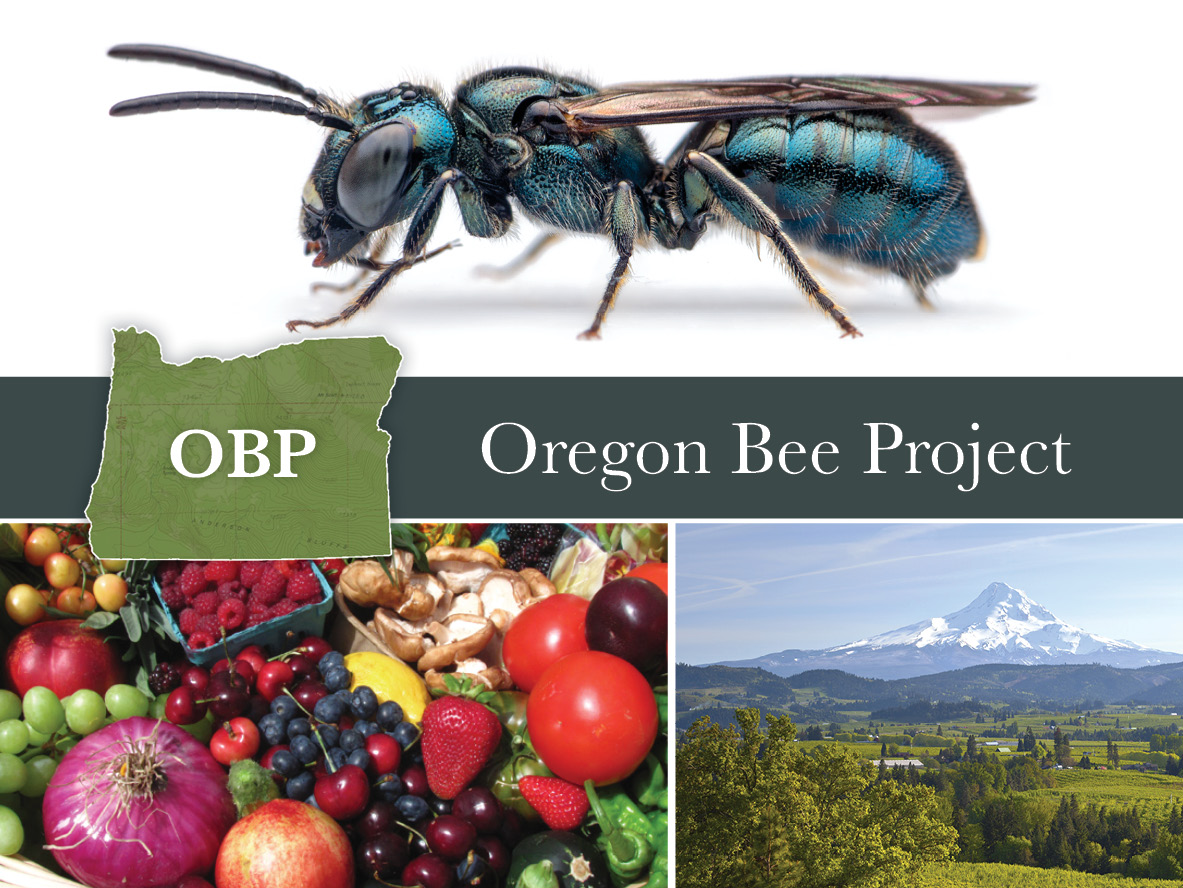 Oregon Bee Project image