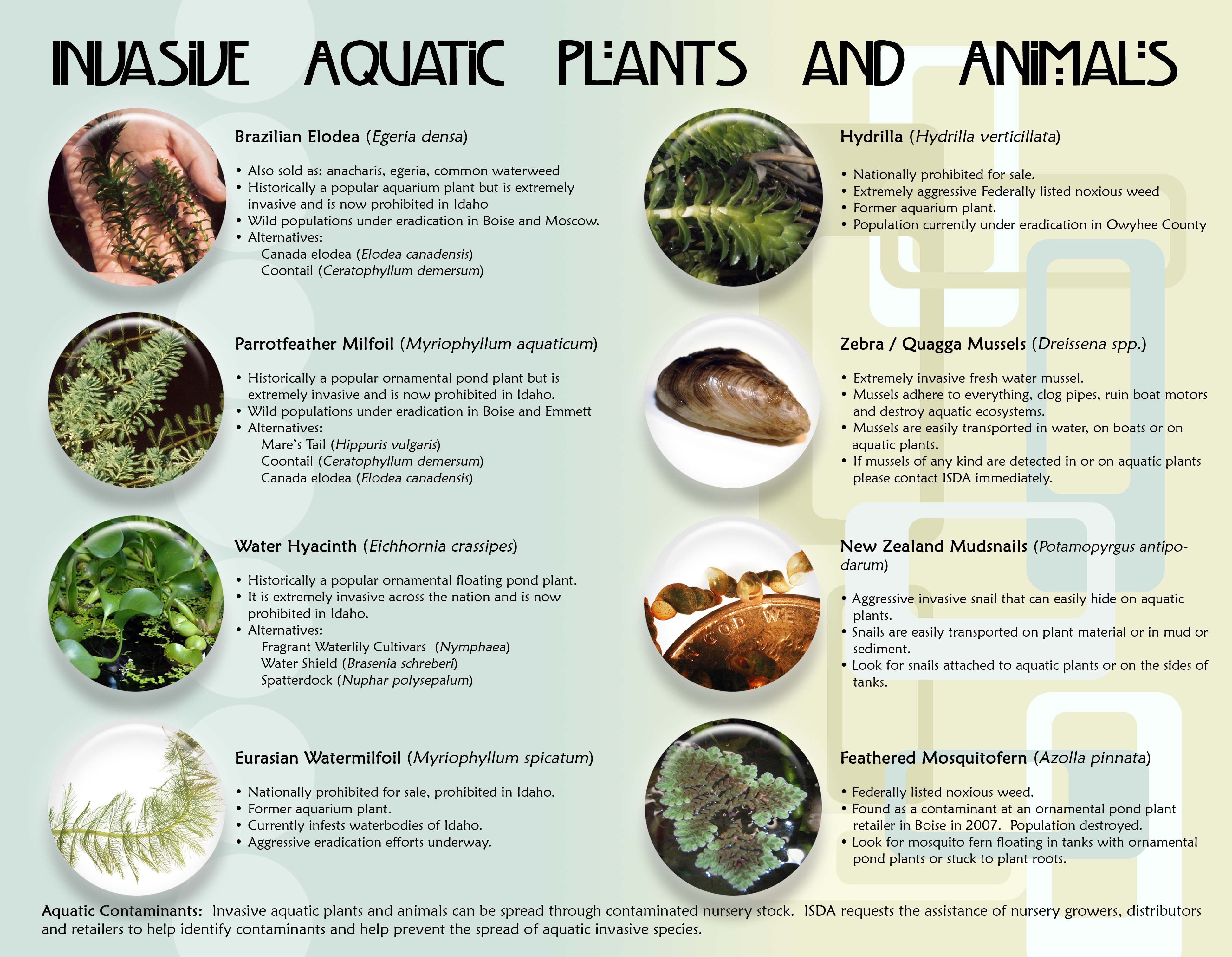 Inage of invasive plants and animals