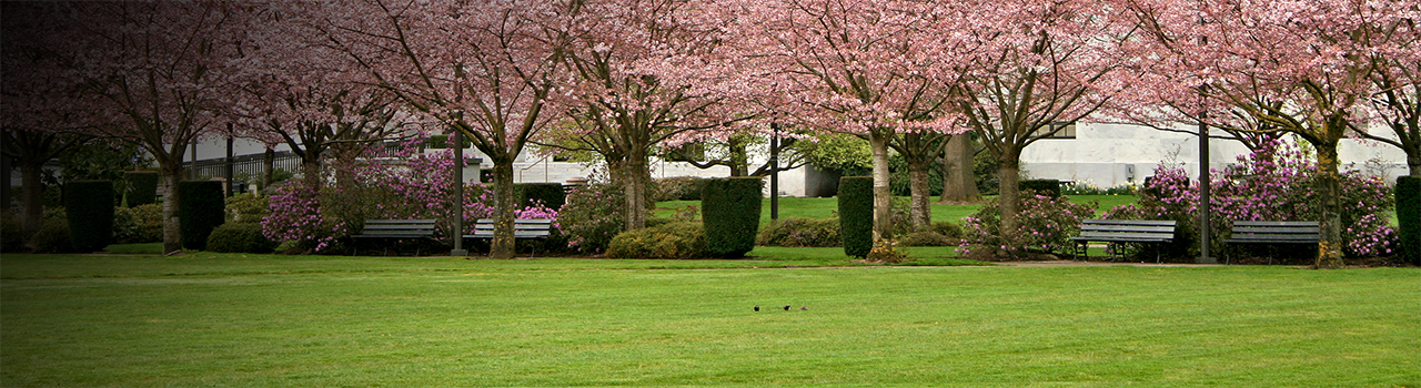 State Capitol State Park with cherry trees in bloom