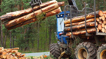 A truck lifting logs and harvesting timber