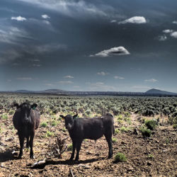 Rangeland photo
