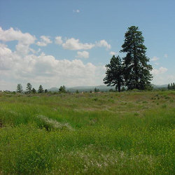 Photo of land (Stevens Rd)