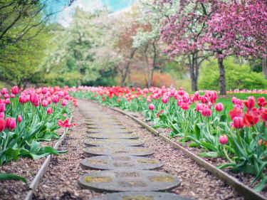 Photo of walkway with flowers