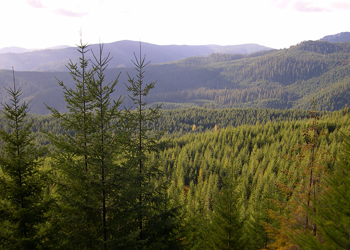 Forests cover a hilly landscape