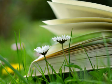 Photo of book in meadow