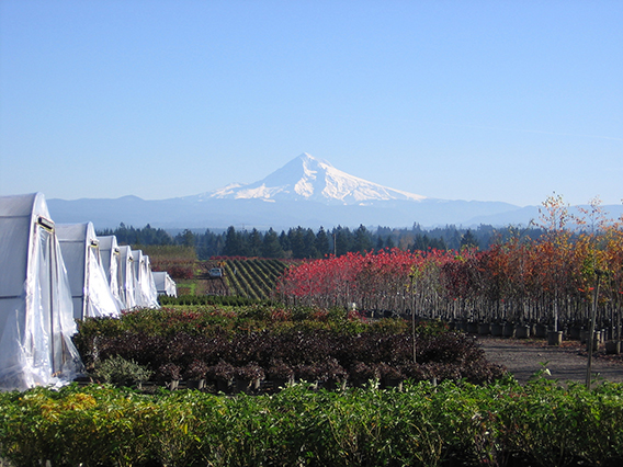 Oregon nursery and green house with Mt. Hood in the background.