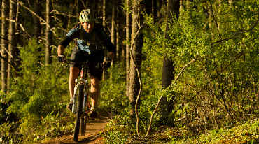Photo of bicycler in forest