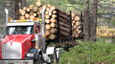 Photo of log truck in forest