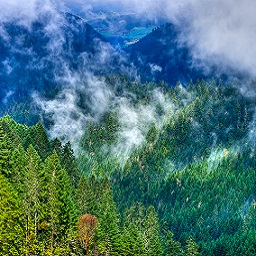 Clouds hover over southwest Oregon's forest
