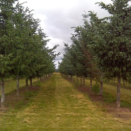 Photo from the seed orchard
