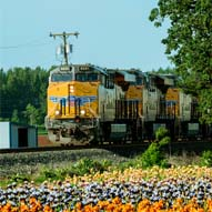 Train Locomotives on railroad track with flowers in foreground