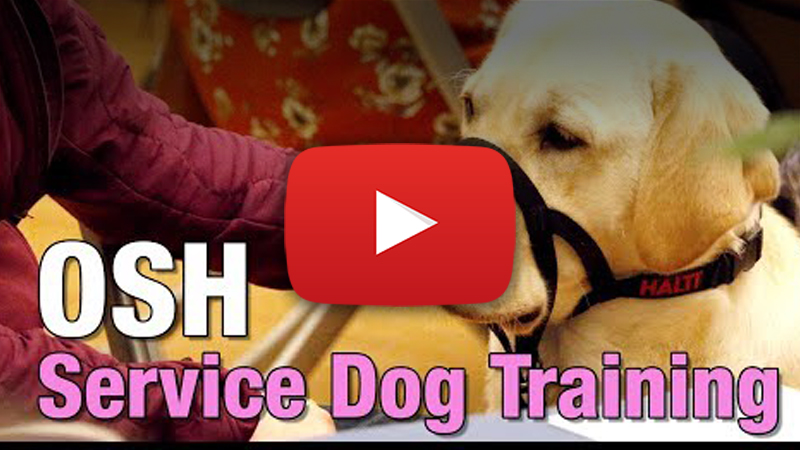 therapy dog graduation video
