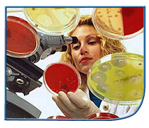 Woman examining specimens in petri dishes using a microscope