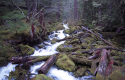 stream running through mossy rocks and fallen trees