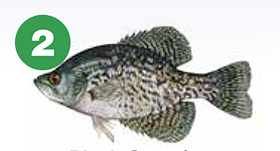 black crappie 2 meals