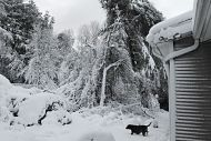 Trees and a house blanketed by a heavy snowfall