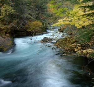 McKenzie River (USFS photo)