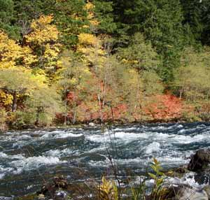 Fall on the banks of the N Umpqua River, Oregon