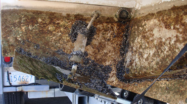 Contaminated boat with invasive quagga mussels