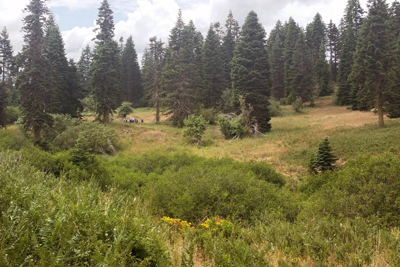 Meadow and trees in Mountcrest