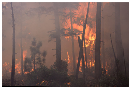 A photo showing a forrest fire due to dry conditions