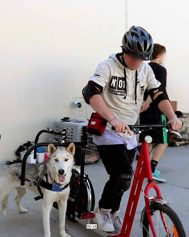 youth on bike with dog