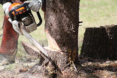 chainsaw cuts into tree trunk.jpg