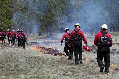 wildland firefighters line up with torches beside grass fire.jpg