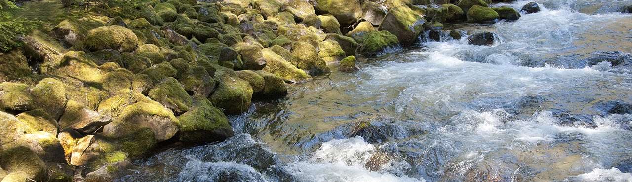 River-Flowing-by-Moss-Covered-Rocks